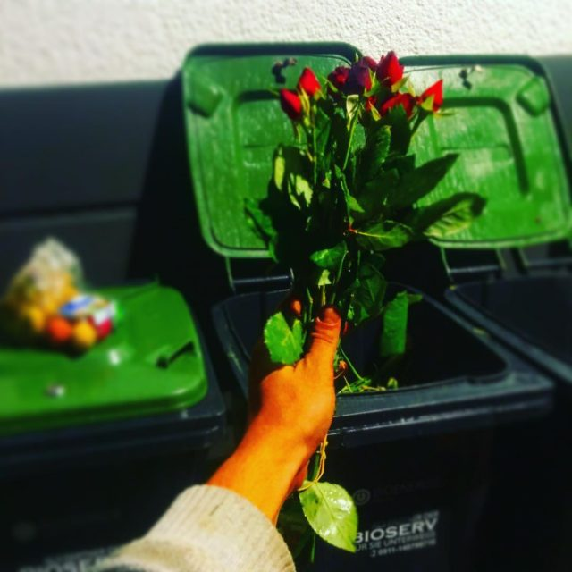 Yeahiii found these nice roses in one of the dumpstershellip